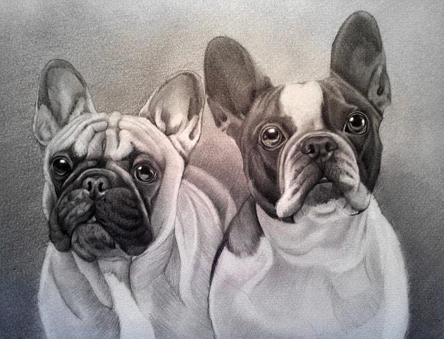 犬のデッサン画