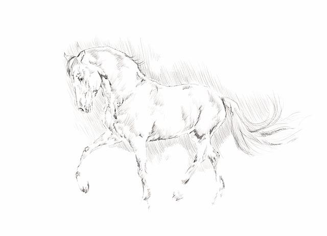 馬のスケッチ