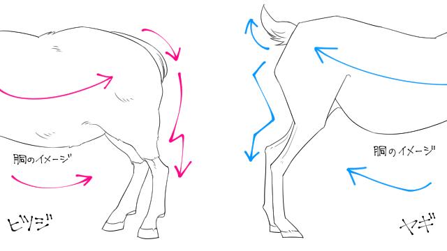 動物 構造 ヤギ 羊