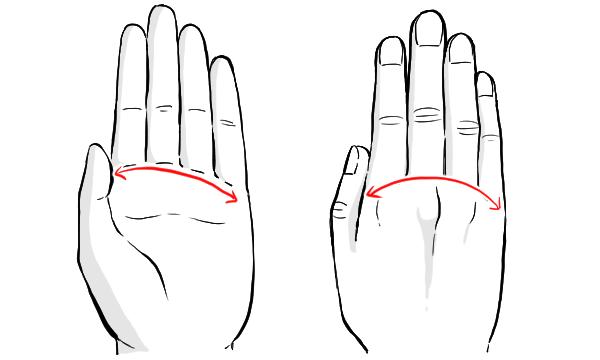 手の平 弧