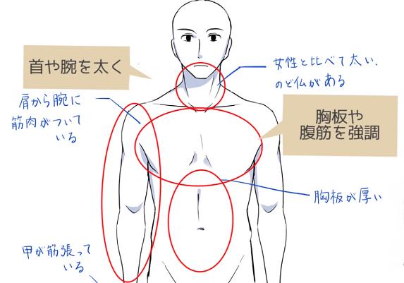 骨格と筋肉で男性らしい体つきを表現