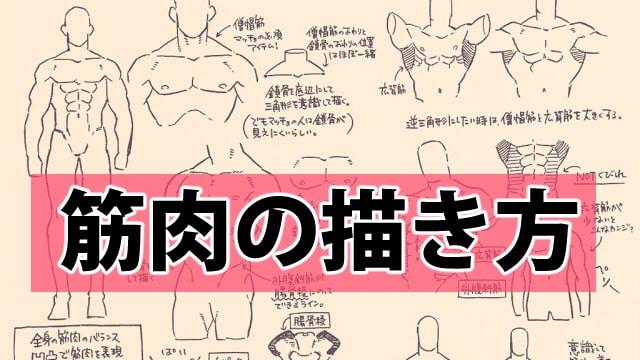 筋肉のイラストの描き方!マッチョを描く上で意識する点をご紹介