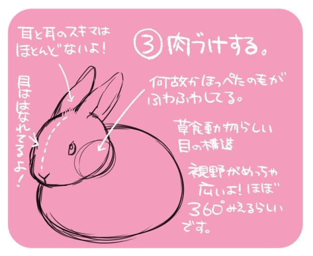 可愛いうさぎの描き方3