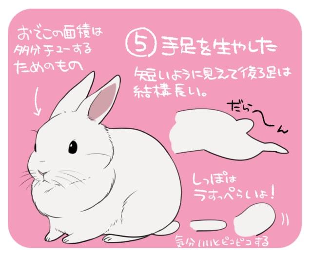 可愛いうさぎの描き方5