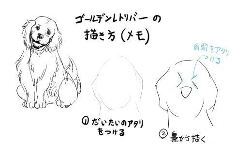 犬のイラストの描き方解説ゴールデンレトリバーを描く手順をご紹介