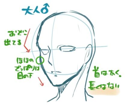 顔の輪郭の描き方男女子供大人の違いをイラストで解説お
