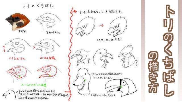 鳥の嘴(くちばし)の描き方!雀や烏、鶏のイラストで解説!