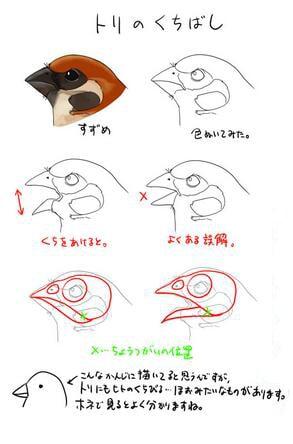 鳥のクチバシの描き方1