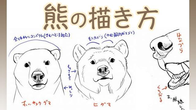 熊のリアルな描き方ホッキョクグマやヒグマの違いもイラスト解説お