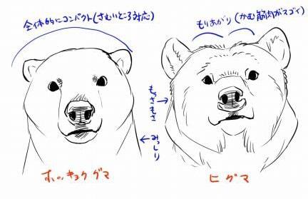 熊の描き方5