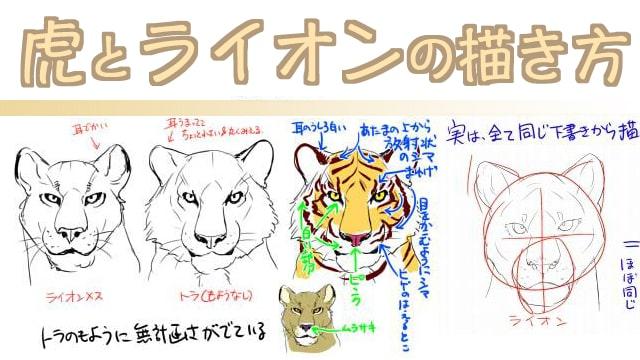 ライオンと虎のイラスト描き方講座!リアルな顔や模様のつけ方も解説!