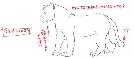 虎とライオンの描き方1