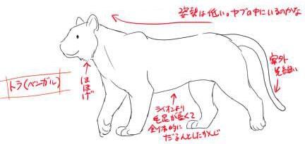 虎とライオンの描き方2