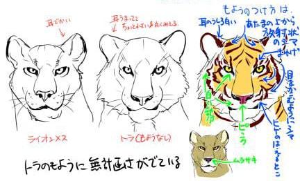 虎とライオンの描き方3