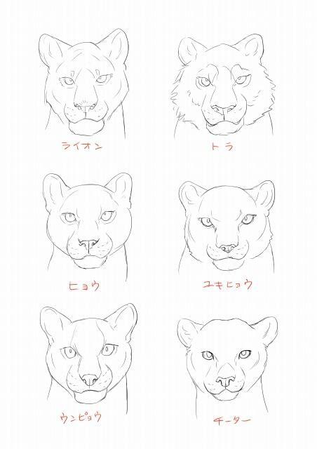 虎とライオンの描き方4
