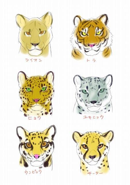 虎とライオンの描き方5