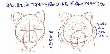 虎とライオンの描き方6