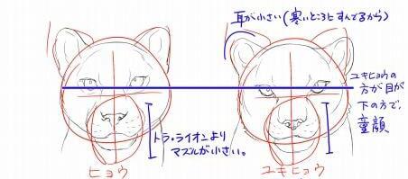 虎とライオンの描き方7