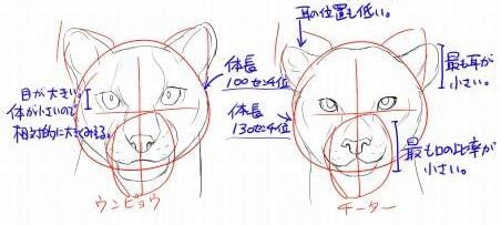 虎とライオンの描き方8