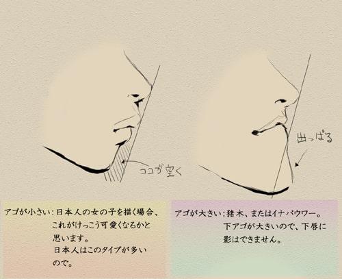 歯と顔のバランスについて4