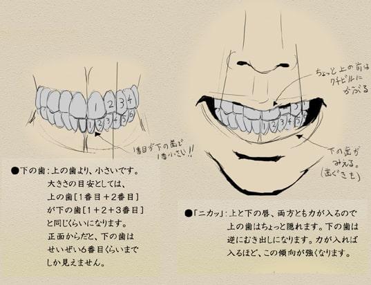 歯と顔のバランスについて9