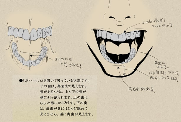 歯と顔のバランスについて10