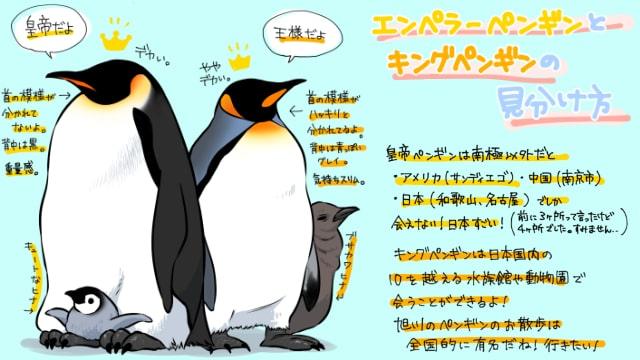 ペンギンイラストの描き方見分け方を解説皇帝ペンギンと王様ペンギン