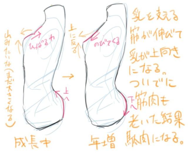 胸の描き方3