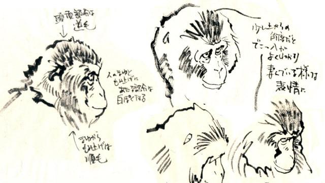猿のリアルな顔の描き方をイラスト解説人の顔との違いから考えようお