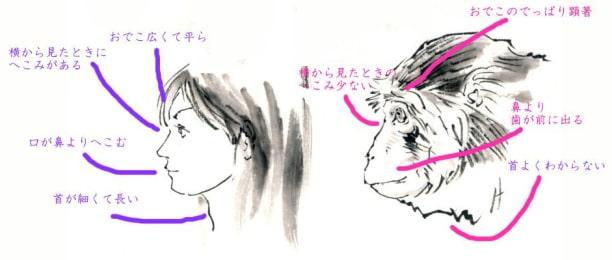 猿の描き方1-2