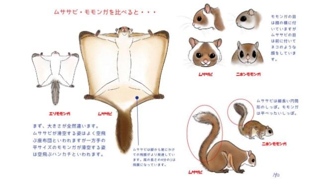 モモンガとムササビをイラスト解説!大きさやしっぽで見分けよう!