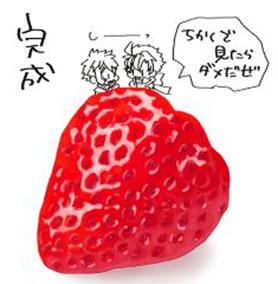 苺のメイキング12