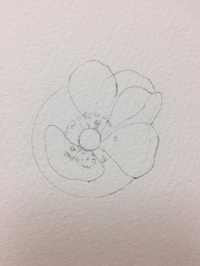 花の水彩画イラストメイキング4