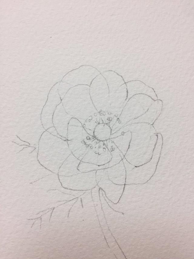 花の水彩画イラストメイキング5