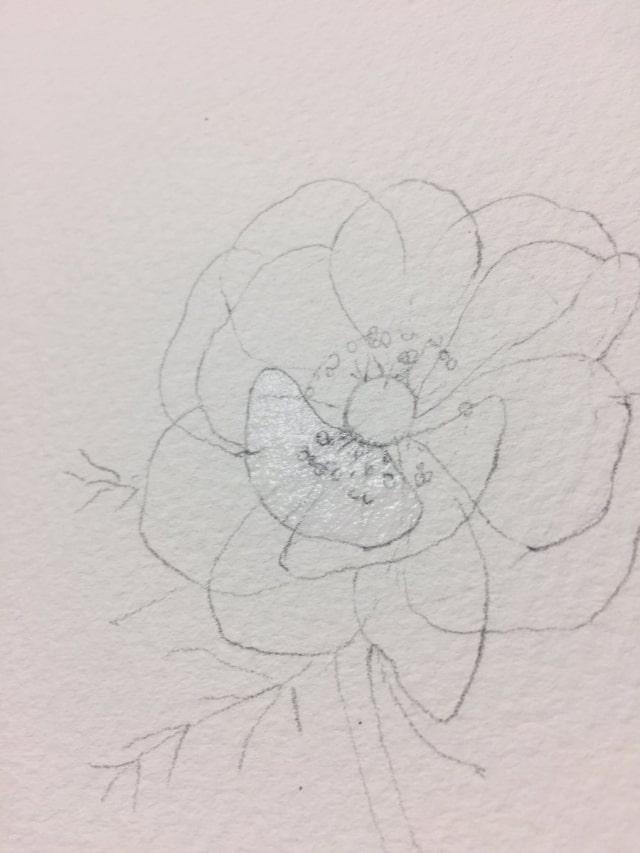 花の水彩画イラストメイキング7