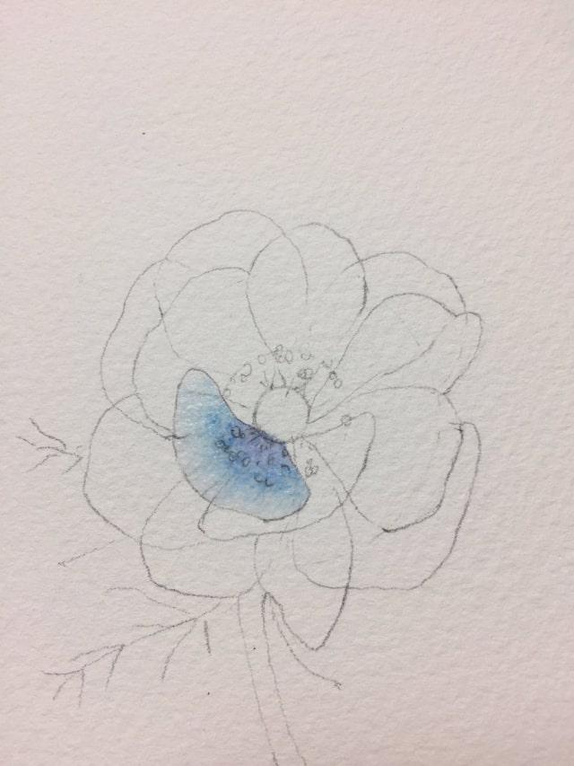花の水彩画イラストメイキング8