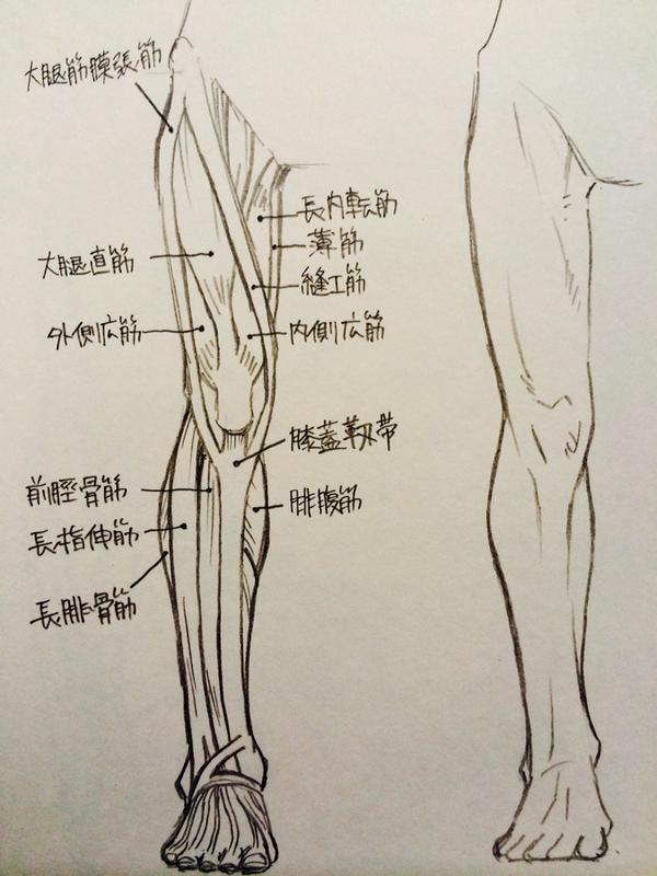 脚・ひざ・ももの描き方1