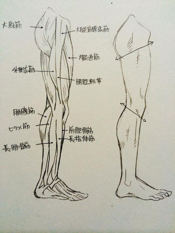 脚・ひざ・ももの描き方2