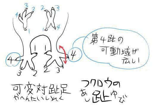 フクロウの描き方1