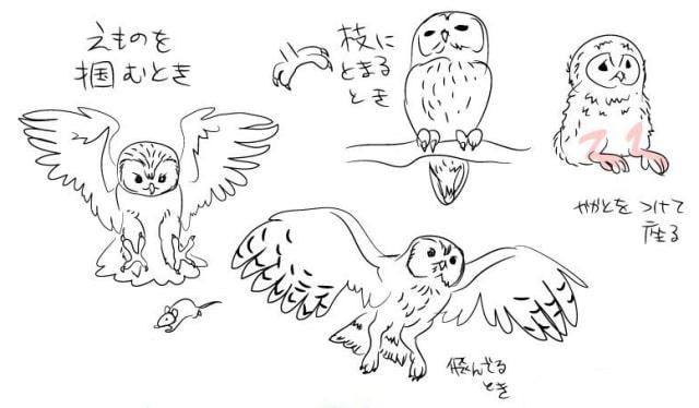 フクロウの描き方2