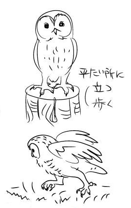 フクロウの描き方3