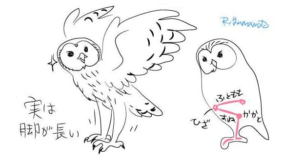 フクロウの描き方4