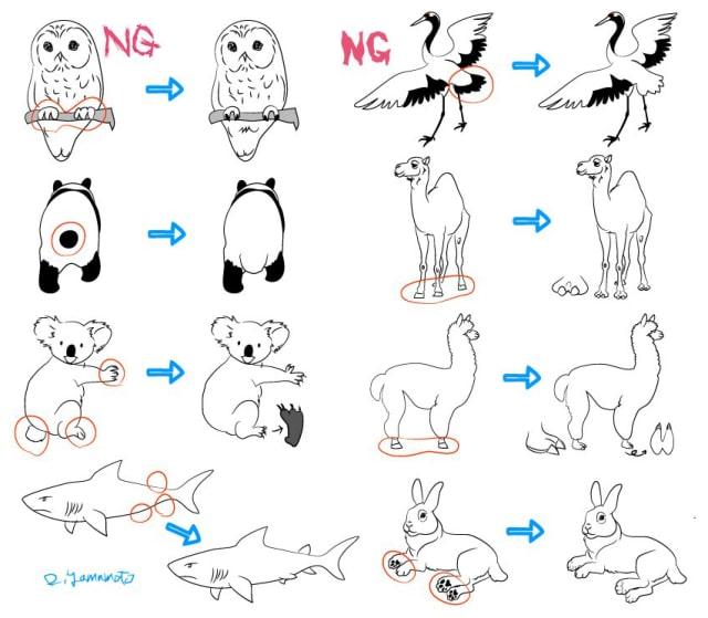 フクロウの描き方5