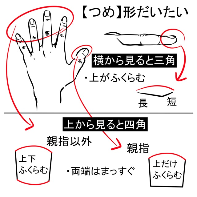 指・爪の描き方4