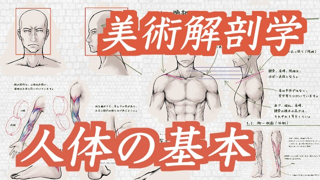 美術解剖学を意識した人体の描き方!比率・筋肉なども解説する初心者オススメ講座です。