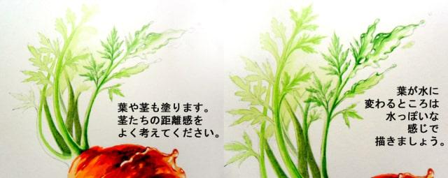 水彩画で水ニンジン13
