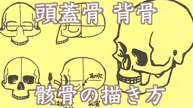 骨や骸骨のイラストの描き方は?頭蓋骨や背骨の仕組みをご紹介。