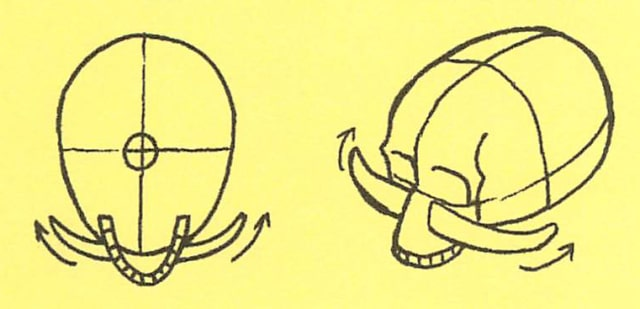 骸骨の描き方9