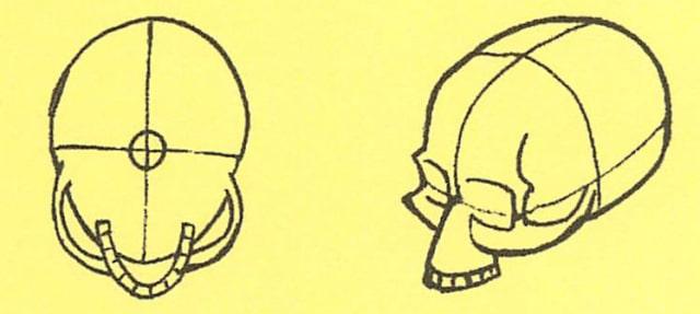 骸骨の描き方11