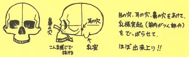 骸骨の描き方14